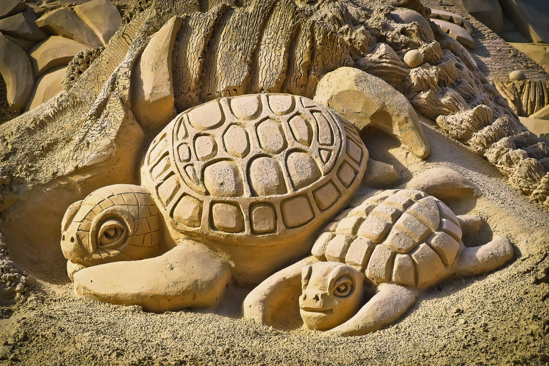 Turtles carved from sand